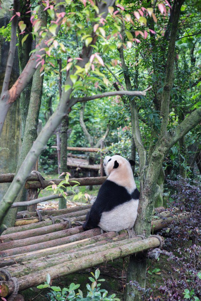 Bristol Zoo Twilights